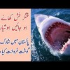 Shark Meat Sold In Pakistan, Find Out Details