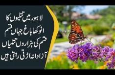 Butterfly Garden In Lahore | Type Of Butterflies In Pakistan