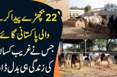 22 bichhre peda karne wali Pakistani gaaye jis ny ghareeb kisaan ki zindagi hi badal dali