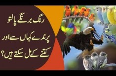 Best Breed Of Birds & Parrots In Pakistan | Which One Is Best To Keep At Home?