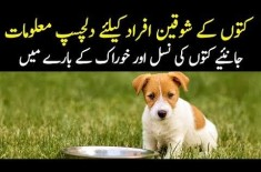 Imported Dogs In Pakistan | Best Breeds Of Dogs | How To Feed A Dog