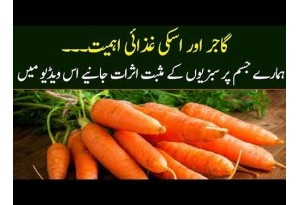 The Importance Of Carrot And Its Nutritive Importance For Our Body