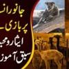 Janwar Insanon Par Baazi Le Gaye Esar O Mohabbat Ki Sabaq Amoz Dastaan