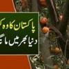 Pakistan Ka Export Quality K Woh Kinu Jis Ki Duniya Bhar Mein Maang Barh Gayi