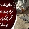 A Shrine With A Lot Of Crocodiles | Watch Shocking Video Of Manghopir Mizar Near Karachi