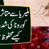 Malaria Se Mutasira Countries Corona Ki Shiddat Se Mehfooz Hain