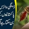 Dengue Virus Ab Bhi PakistaniooN K Liye Khatarnak Ban Sakta Hai