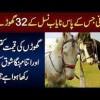 Horse Palna Kitna Mushkil Hai ? 1 Horse Ki Qeemat Kitni Hai?