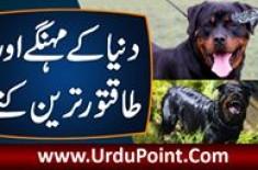 Duniya K Mehange Aur Taqatwar Dogs