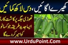 Grow Cucumbers On Limited Land Space & Earn 10 Lacs – Technique That Will Make Farmers Rich