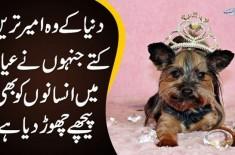 Duniya K Ameer Tareen Dogs Jinhon Ne Ayashi Mein Insanon Ko Bhi Peche Chorr Diya