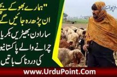 Problems Shepherds Face In Winter Season | Goats Falling Ill Due To Cold Weather