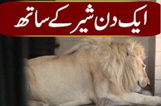How Do Lions Live In Karachi Zoo? | Watch The Video Of Beautiful Wild Creatures