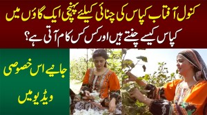 Kanwal Aftab Visits Cotton Field In Village & Helps Cotton Pickers