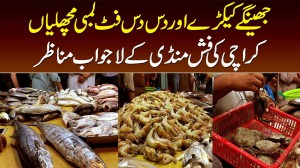 Jheenge, Kekray, 10 10 Foot Lambi Fish - Karachi Ki Fish Mandi Ke Lajawab Manazir
