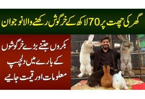Ghar Ki Chat Per 70 Lakh Ke Bakron Jitne Baray Rabbits Rakhne Wala Naujawan
