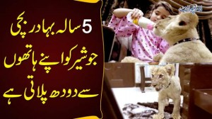 5 Year Brave Girl Who Feeds Milk To Lion Herself - Sheer Ka Bacha Jo Doodh Peeta Hai