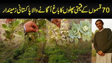 70 Types Ke Qeemti Phalon Ka Bagh Uganay Wala Pakistani Zamindar