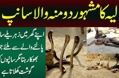 Two Headed Snake In Layyah - Ghar Me Dangerous Snakes Palne Wala Jo Snakes Ko Gosht Khilata Hai