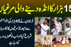 15 Hazar Ka Anda Dene Wali Murghian - 45000 Ki Investment Se Imported Hen Ka Business, Lakhon Profit
