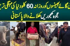 Apni Gaye Bhainson Ko Daily 60 KG Duniya Ki Mehngi Tareen Ajwa Khajoorain Khilane Wala Pakistani