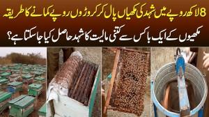 8 Lakh Rupaye Se Honey Bees Paal Kar Croron Kamane Ka Tariqa