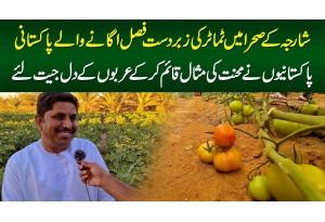 Sharjah Desert Me Tomatoes Kasht Karne Wala Pakistani - Pakistanio Ne Emirati Logon Ke Dil Jeet Liye
