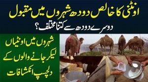 Pure Camel Milk Doosray Milk Se Kitna Different Hai? - Camel Milk Sale Karne Walon Ke Inkishafat