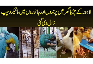 Lahore Zoo Mein Birds And Animals Mein Microchip Insert Di Gayi