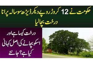 Govt Ne 12 Crore Dekar 150 Sal Purana Darakht Bacha Lia - Darakht Kesa Hai, Bachane Ki Waja Kya Hai?