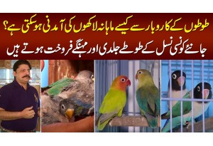 Love Birds Ke Business Se Lakhon Kese Kama Sakte Hain? - Parrots Ki Expensive Breed Konsi Hai?