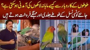 Love Birds Ke Business Se Lakhon Kese Kama Sakte Hain? - Parrots Ki Expensive Breed Konsi Hai?