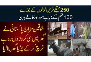250 Expensive Parrots, 100 More Aur Kaley Hirn - Pakistani Ney Ghar Per Zoo Bana Lia!