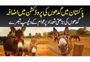 Pakistan Me Gadhon Ki Production Me Izafa - Gadhon Ki Barhti Tadaad Per Dekhiye Awami Tabsaray