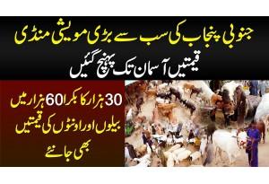 South Punjab Ki Sab Se Bari Maveshi Mandi - 30 Hazar Ka Bakra 60 Hazar Me - Cow & Camel Rates Janiye