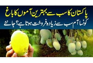 Pakistan's Best Mango Garden - Kaunsa Aam Sab Se Ziada Sale Hota Hai? Janiye