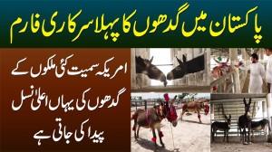 Pakistan Me Pehla Donkey Farm - America Samait Kai Mulkon Ke Gadhon Ki Yahan Breeding Ki Jati Hai