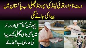 Vietnam Or Thailand Ki Imported Fish Ab Pakistan Me - Sasti Aur Bari Fish Kese Paida Ki Ja Rahi Hai?