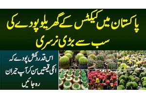 Pakistan Me Cactus Plant Ki Sab Se Bari Nursery - Dilkash Plant Ki Kimat Jan Kar Heran Ho Jayenge