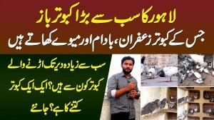 Lahore Ka Sab Se Bara Kabootar Baaz Jiske Kabootar Badam Mewe Khate Hain - Ek Kabootar Kitne Ka Hai?