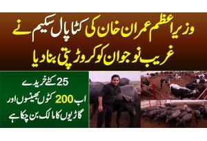 PM Imran Khan Ki Katta Paal Scheme Ne Ghareeb Ko Crorepati Bana Dia - 200 Janwaron Ka Maalik Bun Gia
