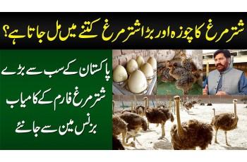 Ostrich Farming Kese Hoti Hai? Chicks Kitne Ka Milta Hai? - Ostrich Farm Ke Businessman Se Janiye