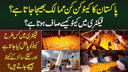 Pakistan Ka Kinnow Kaunsi Countries Me Bheja Jata Hai? Factory Me Safai Or Polish Kese Hoti Hai?