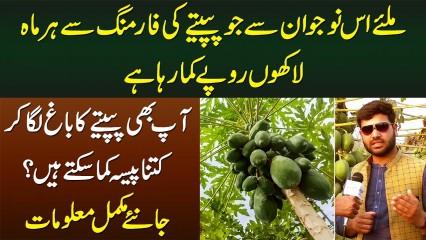 Papaya Farming Se Kese Monthly Lakhon Kama Sakte Hain? - Meet Papaya Farmer Anas Bhatti