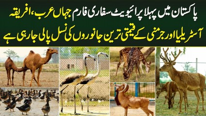 Pakistan's First Private Safari Farm - All Expensive And Rare Animals' Breeding In One Place