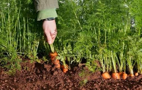 باغبانی کے بنیادی اصول