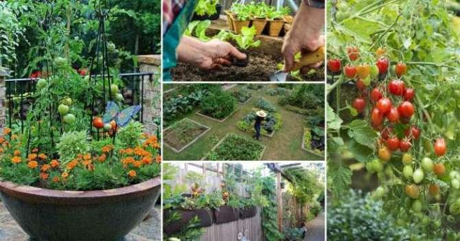 Kitchen Gardening Hai Waqt Ki Zarorat